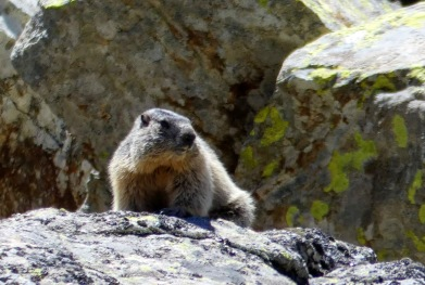 Séjour Ascension Marmotte